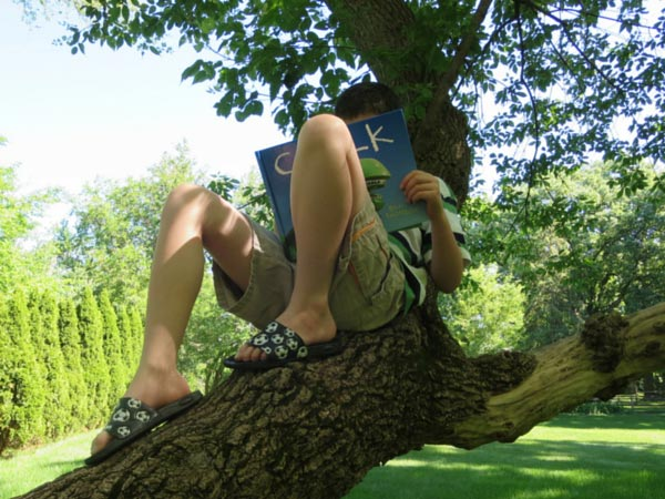 Child reading a wordless picture book in a tree