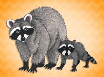 mother and baby raccoon