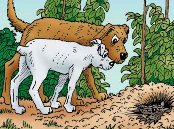 Hank the Cowdog - Chapter Book Reviews from All About Reading
