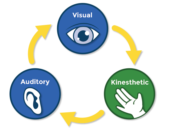 visual kinesthetic and auditory pathways to the brain graphic